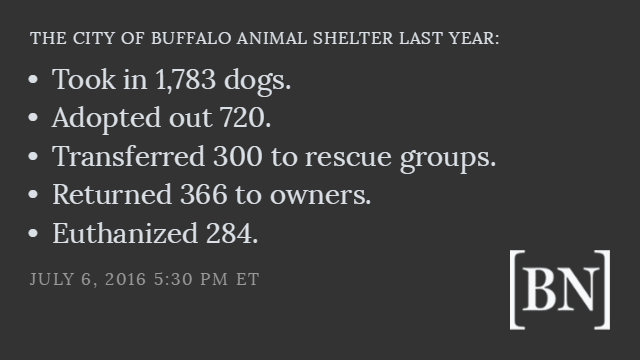 factlist-the-city-of-buffalo-animal-shelter-last-year (1)
