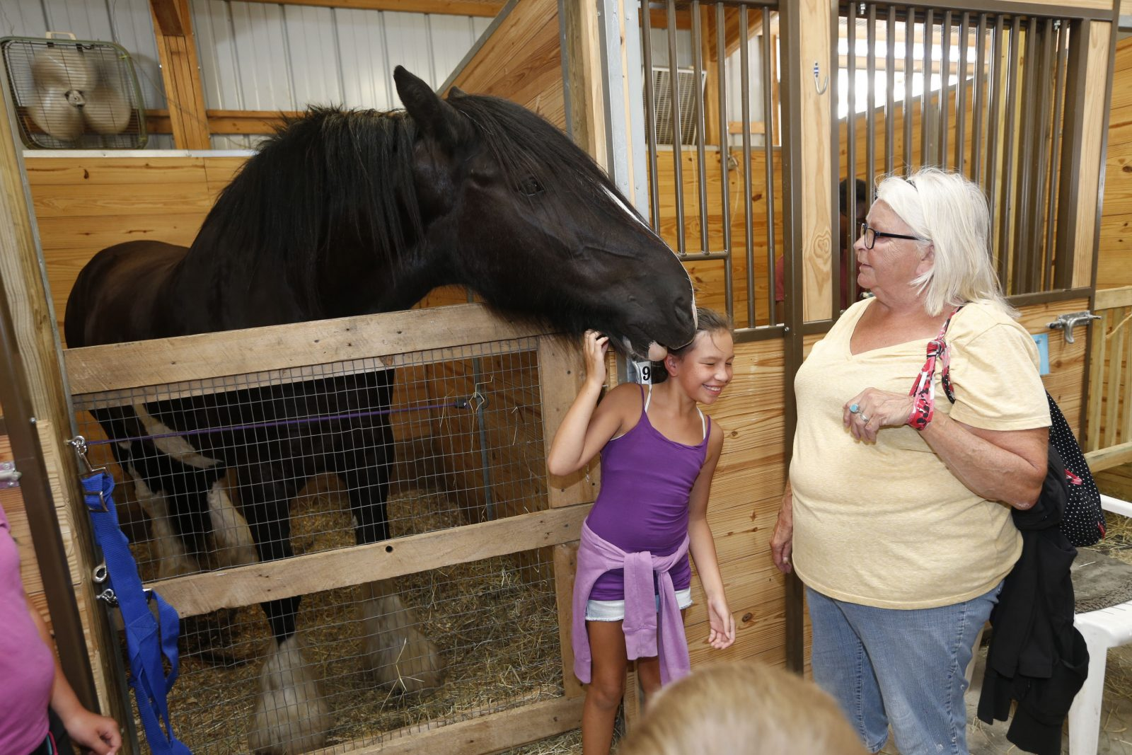 The Horse Experience from the 2016 Erie County Fair. (Robert Kirkham/Buffalo News)