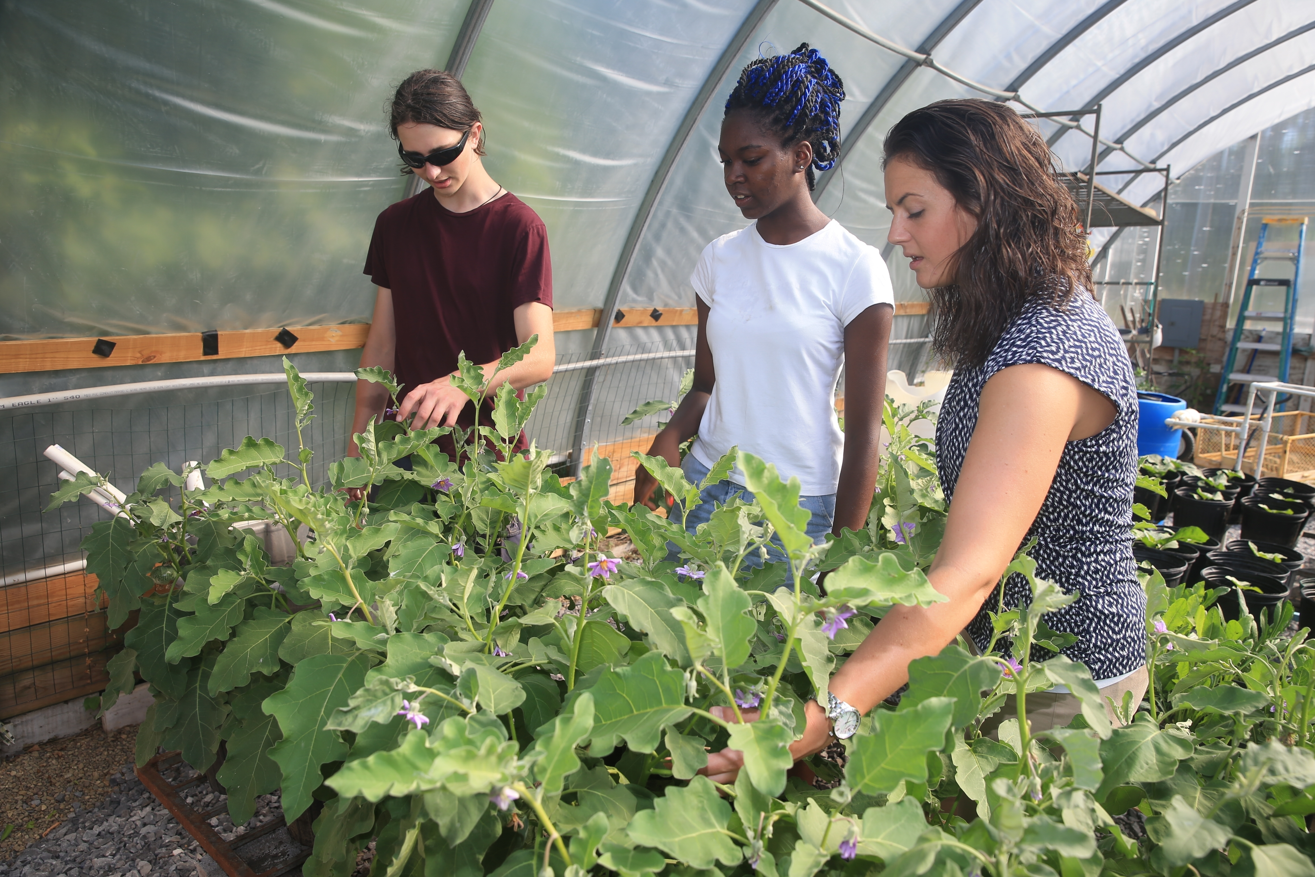 Katie Lyons O'Connor, right, of M&T Community Investment, inspects eggplants Thursday with Massachusetts Avenue Project students  Alexis Smith, center, and Javert Boudreau.