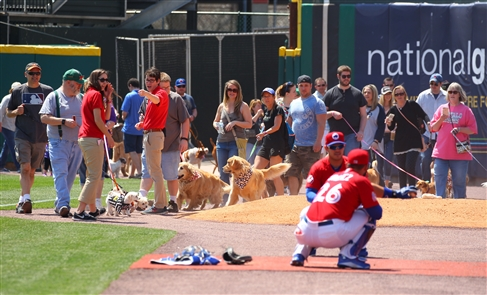 Bisons Dog Day at the Ballpark 2016
