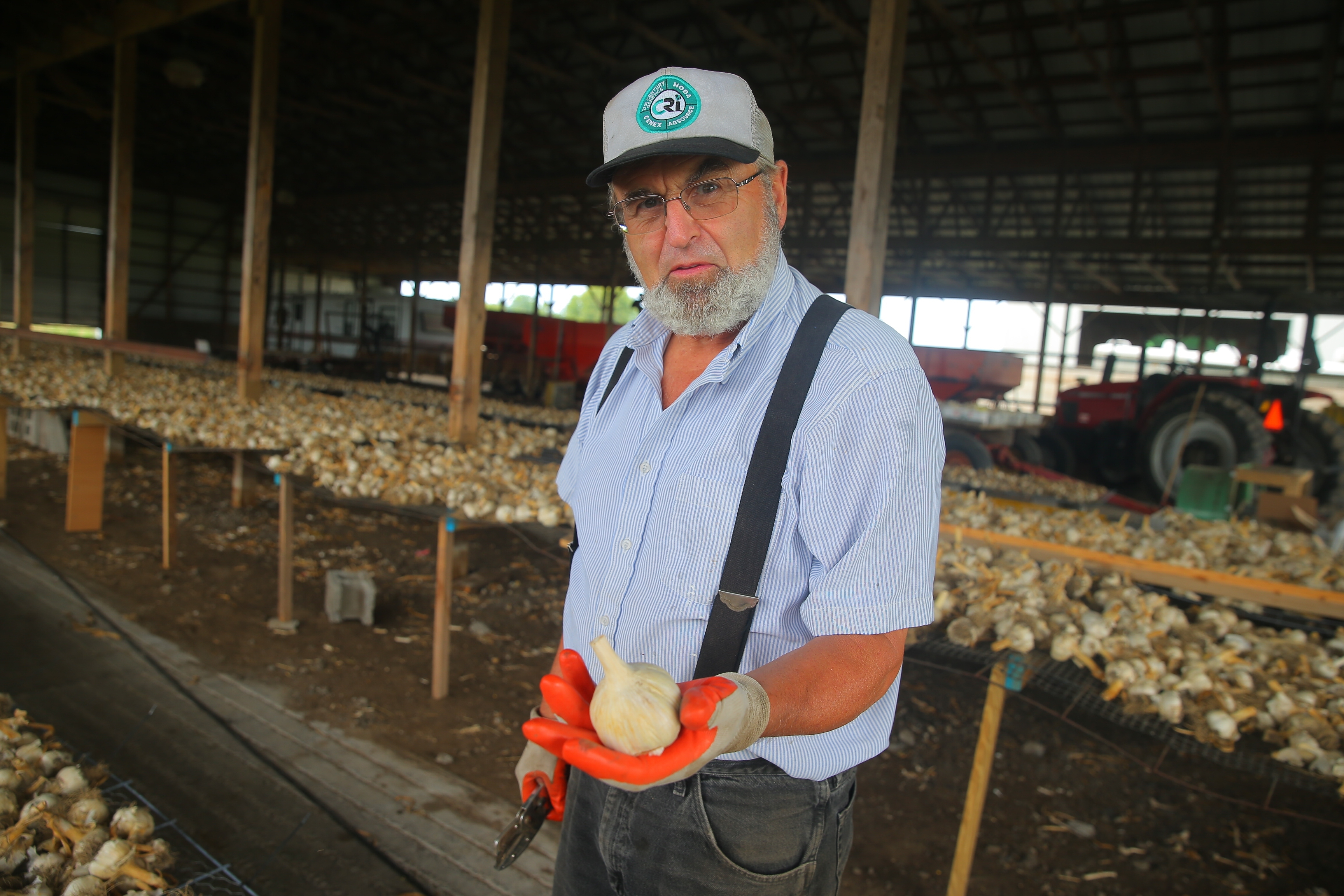 Bruce Muck and his harvest of garlic grown on his Wilson farm. The former dairy farmer turned to garlic, and this year he had his best crop ever, which he sells at farmers markets and his farm on Wilson-Cambria Road.