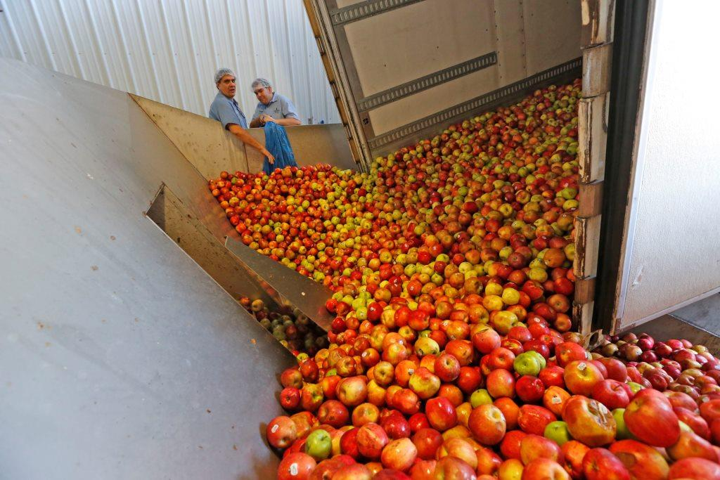 Local apples get dumped into the hopper to go on their journey to become cider at Mayer Bros. Cider Mill. (Robert Kirkham/Buffalo News)