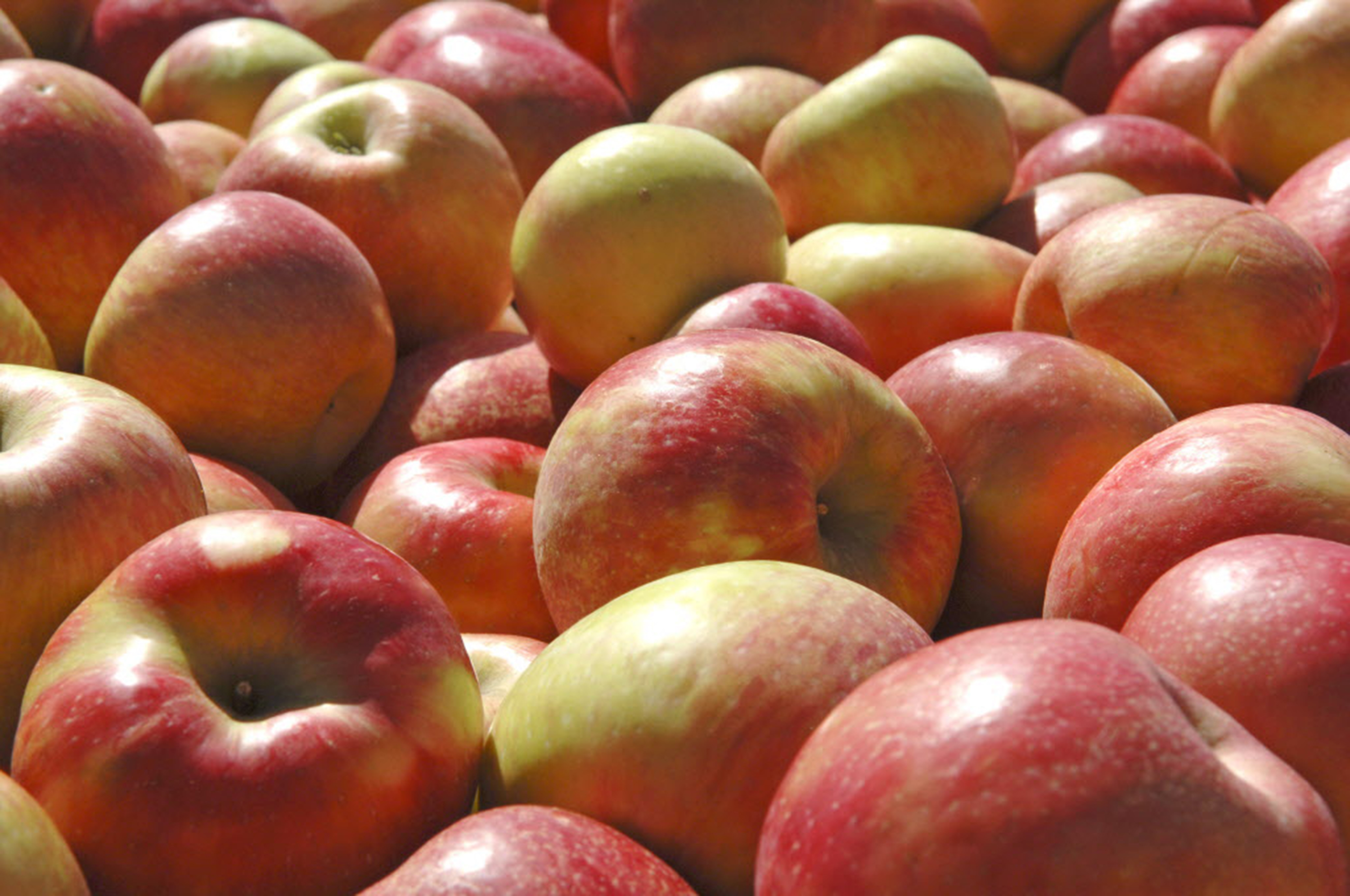 Spend time out in the crisp fall air picking apples.