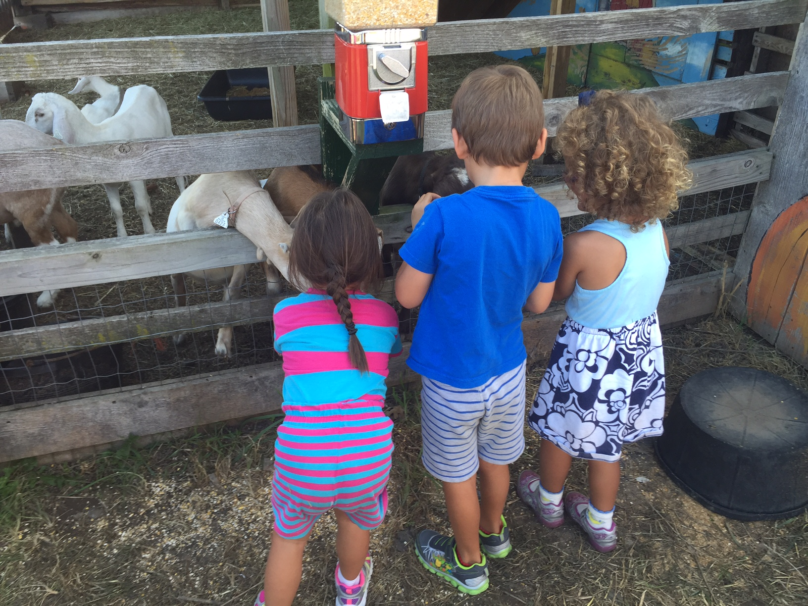 The kids loved feeding the farm animals. Emma with friends, Henry and Maddy.