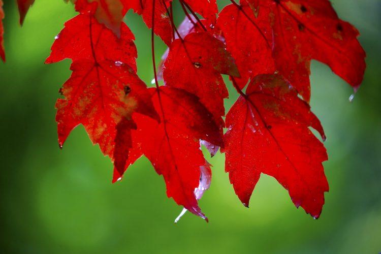 Weekend features peak leaf peeping time around WNY