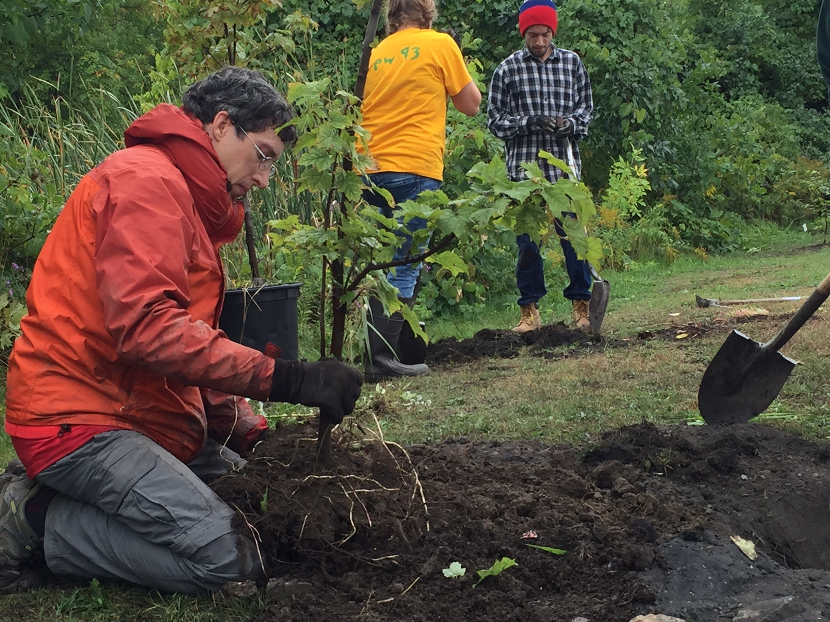 Volunteers with the Buffalo Niagara Riverkeeper organization plant trees and shrubs along Gill Creek on Tuesday, Oct. 4, 2016. The organization held a news conference to announce a restoration project that includes planting 120 new trees and understory vegetation along the creek in Niagara County. (Provided photo)