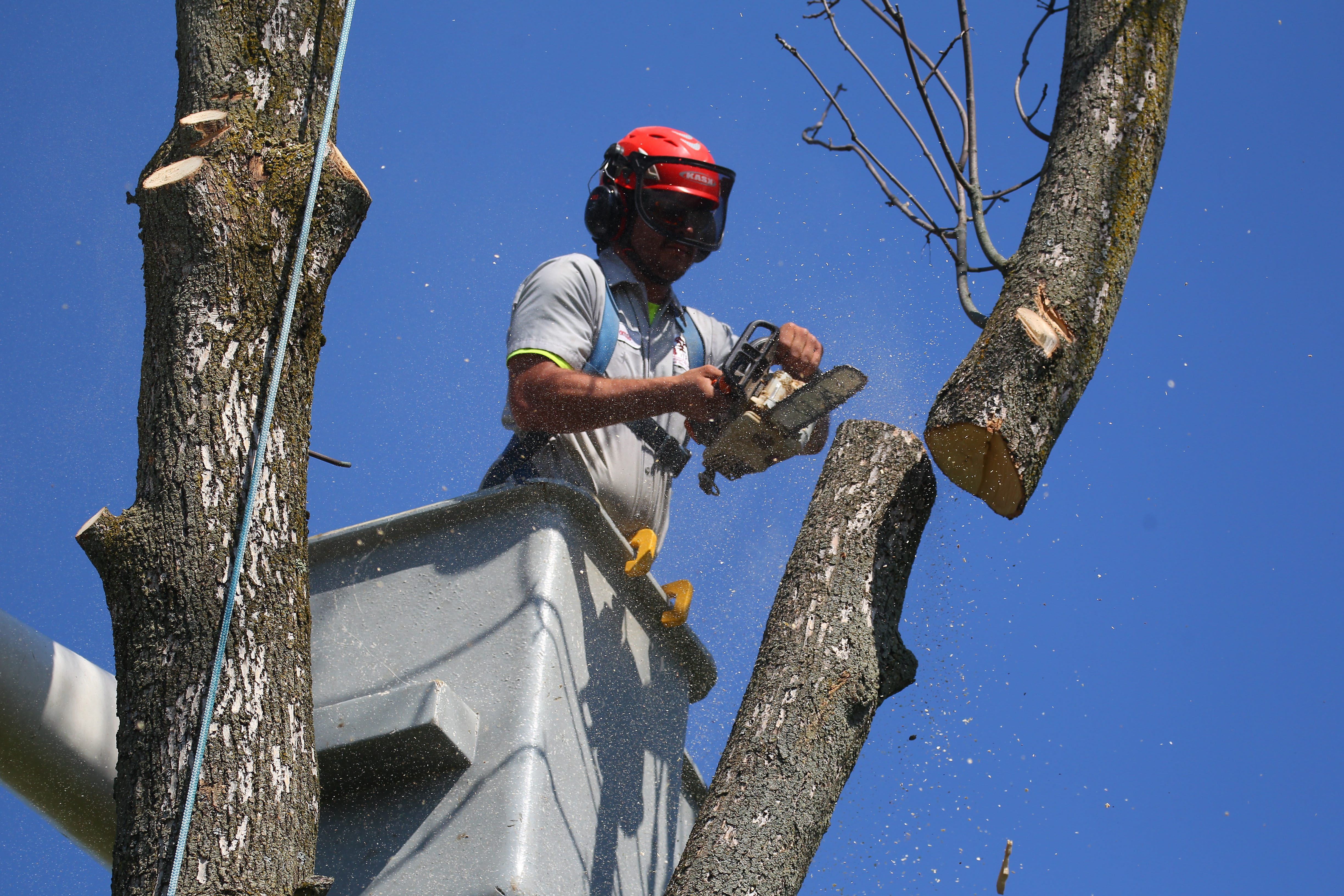 Crews from Wright-Frontier take down a dead ash tree in Amherst on Monday, May 23, 2016.   (Mark Mulville/Buffalo News/File photo)