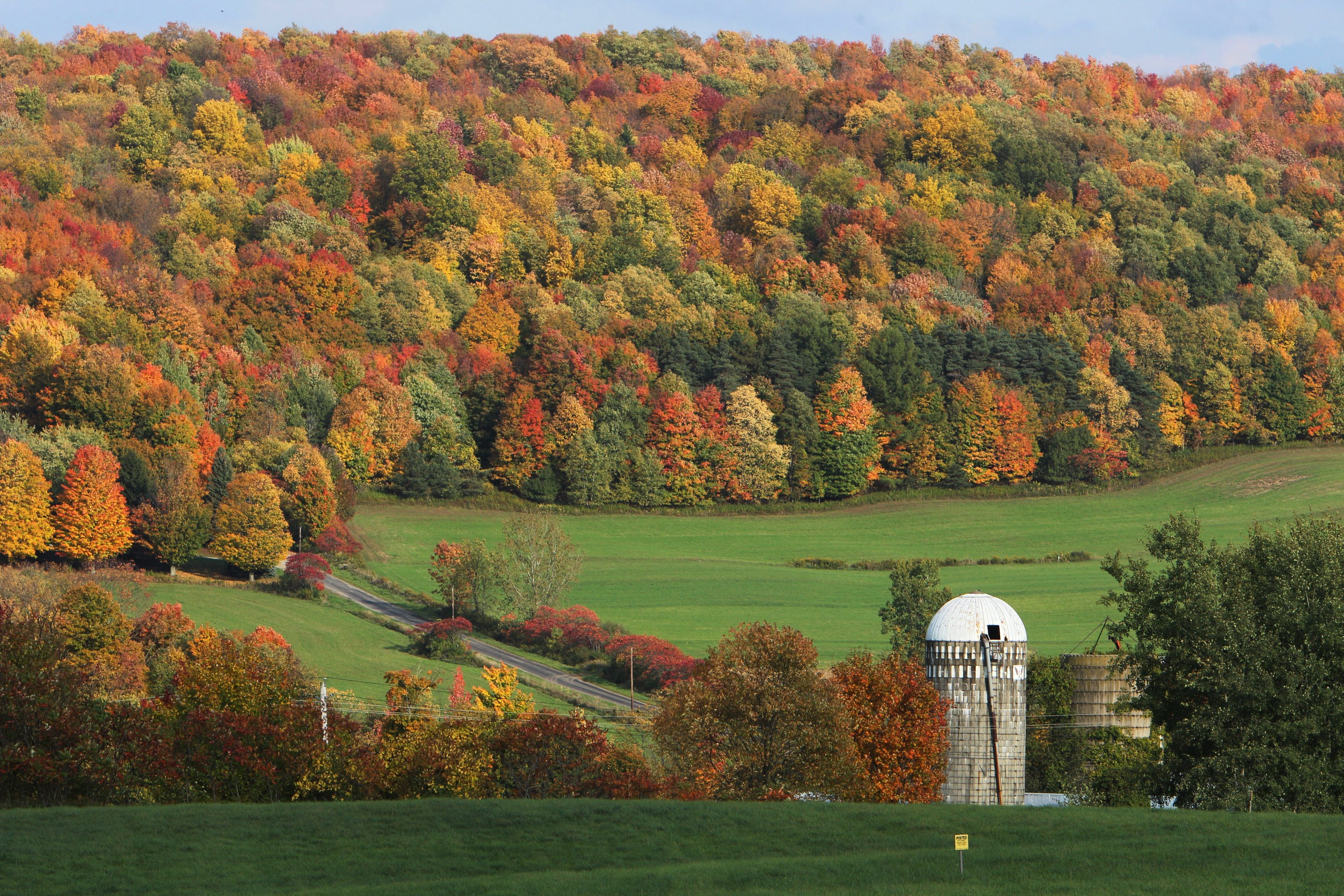Trees display a blazing autumn palette along Leon Road in the town of New Albion in Cattaraugus County on Thursday, Oct. 4, 2012.   (Sharon Cantillon / Buffalo News)