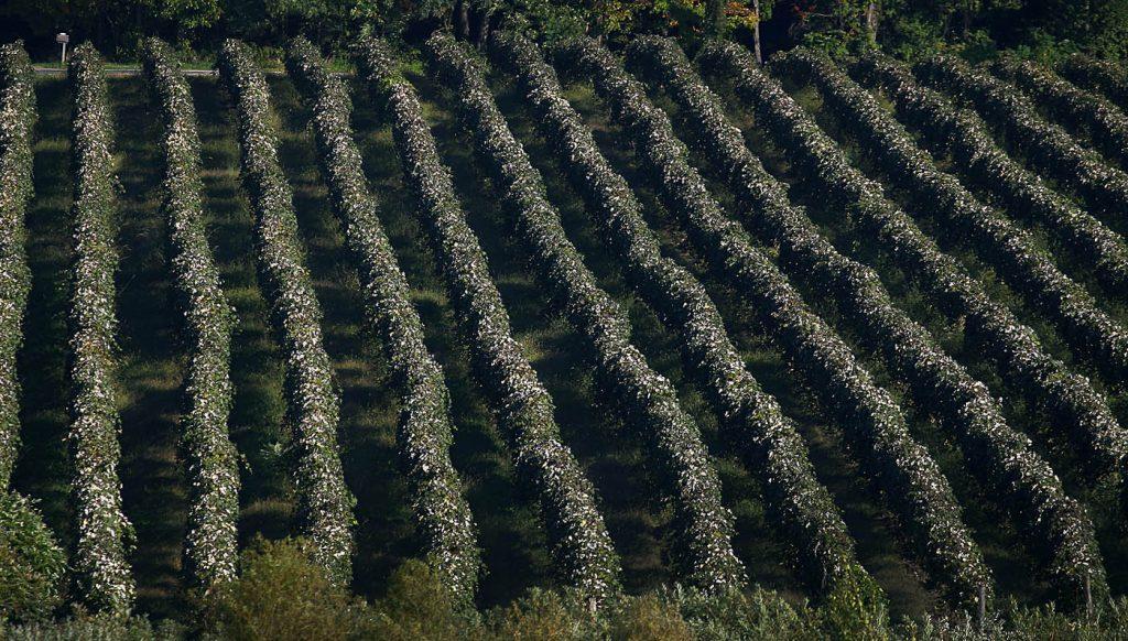 crop-harvest