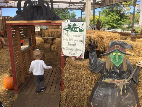 The maze at Zittle's is a lot of fun for the kids.