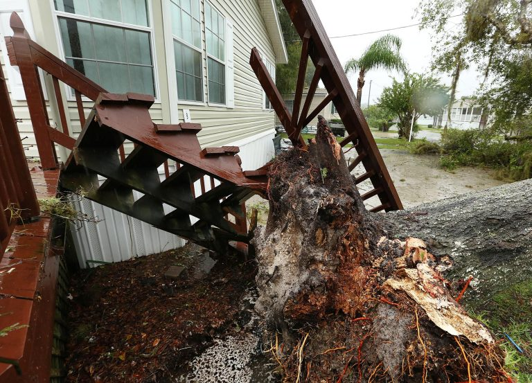 A fallen tree rests on a home in the Castaways on the River as Hurricane Matthew blows into Astor on Friday, Oct. 7, 2016. (Stephen M. Dowell/Orlando Sentinel/TNS)