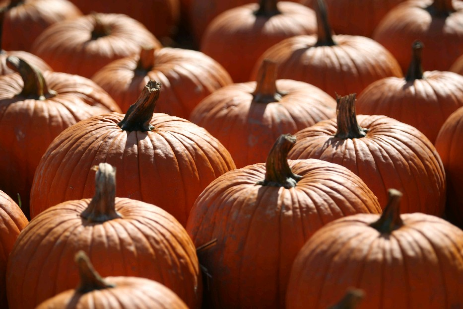 Pumpkins are high in vitamin A, which helps with eyesight. (Sharon Cantillon/Buffalo News)