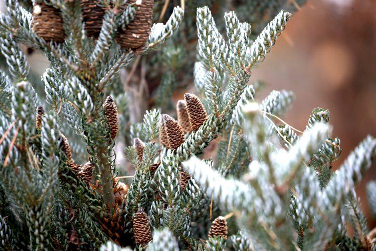 Today the Draves Arboretum has at least 500 tree species. (Robert Kirkham/Buffalo News)