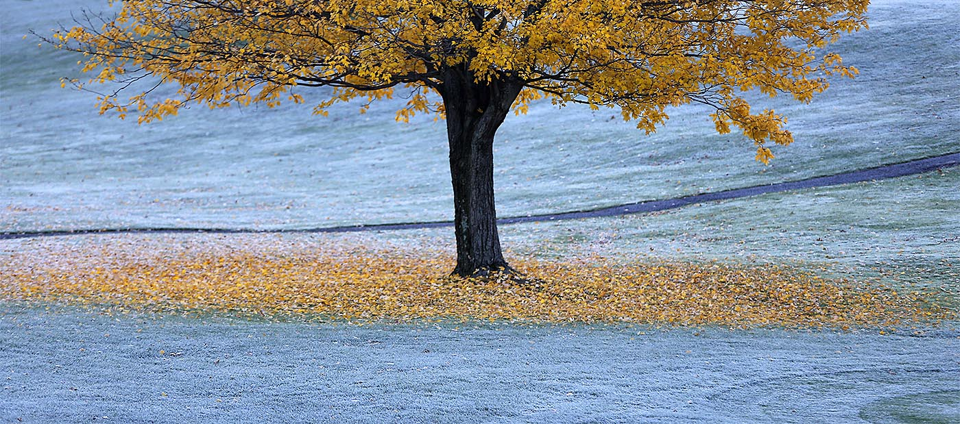 Frost covers the leaves and grass around a tree at the Orchard Park Country Club in Orchard Park last fall. (Mark Mulville/News file photo)