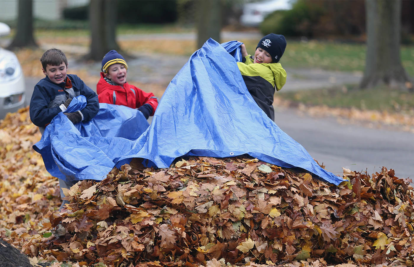 The Morse brothers with the help of their cousin visiting from Florida help their dad with leaf cleanup, Wednesday, Nov. 23, 2016.  The drag lots of leaves from backyard and deposit them on the  street for pickup on Morris Ave. in Buffalo.  From left is cousin Riley Benzenberg, 9, Andrew Morse, 8, his brother Ben Morse, 11. (Sharon Cantillon/Buffalo News)