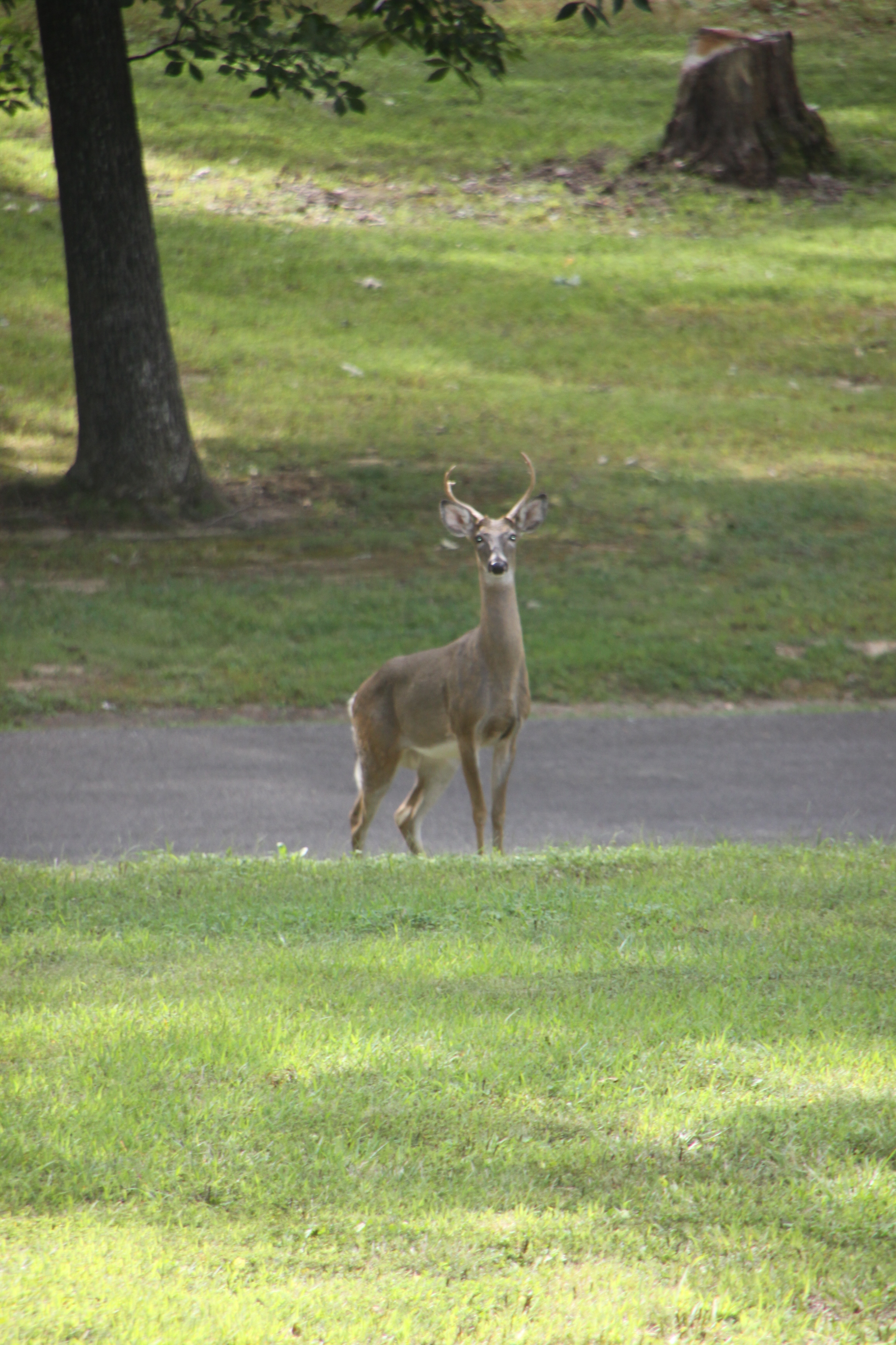 Deer-car collisions increase this time of year.