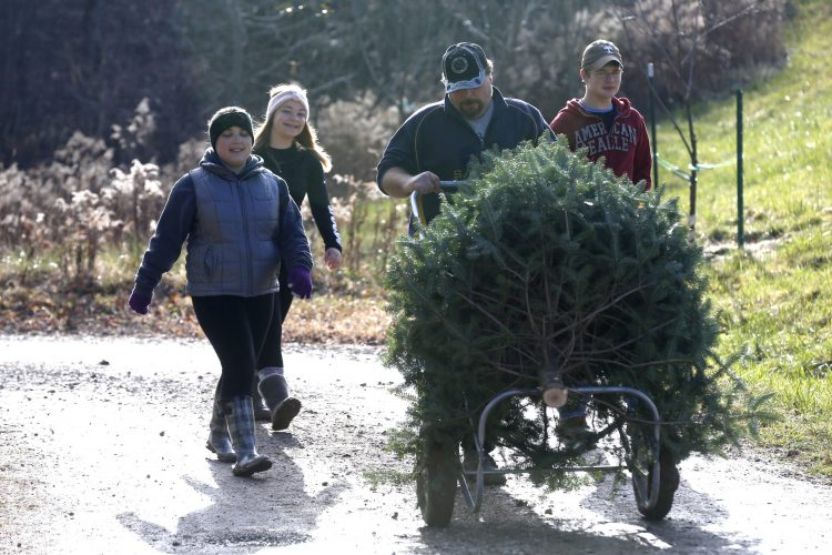 Where to go to cut down your own Christmas tree