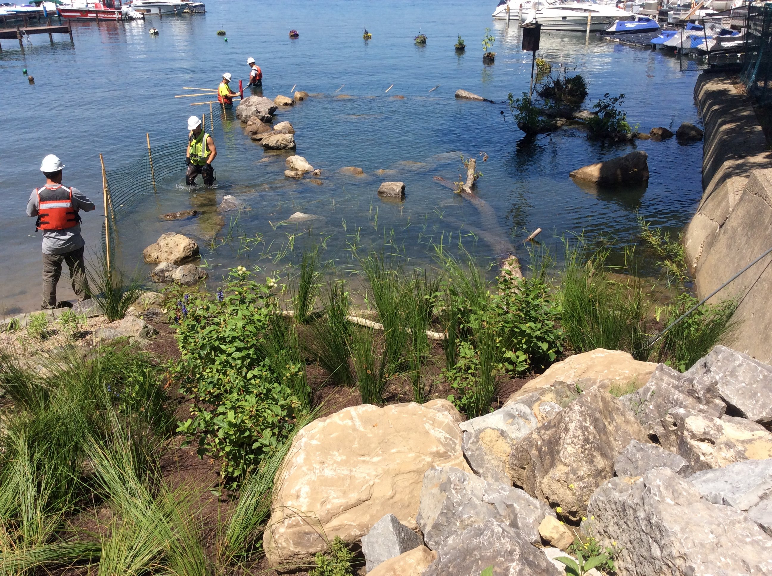 Underwater plantings were placed in the Niagara River last spring to aid in habitat for aquatic life near the Sandy Beach Park Club on Grand Island. (Buffalo Niagara Riverkeeper image)