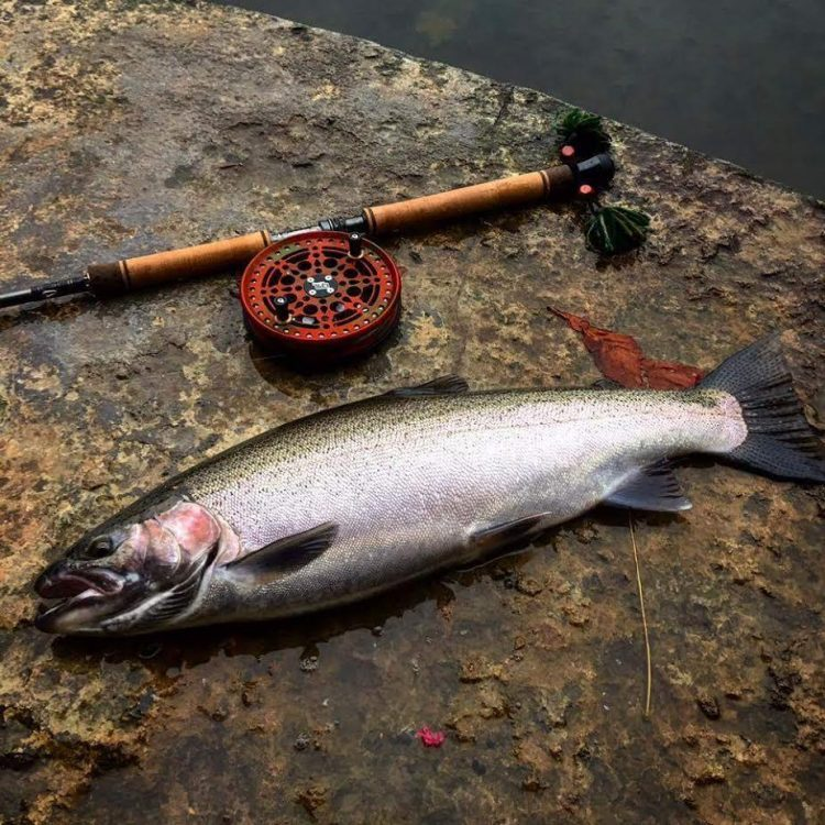 Jake Brandel of Hamburg caught this nice steelhead while center pin fishing 18 Mile Creek in Erie County this week.