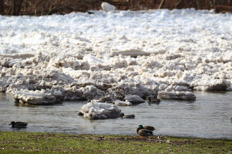 Melting snow leads to standing water runoff into creeks, streams and sewage treatment plants. When there's too much, the plants overflow sewage into area waterways the same way they do during summertime rainstorms. (Mark Mulville/Buffalo News)