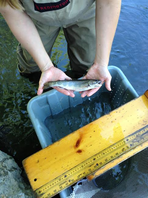There are more than 300 streams with brook trout winding throughout Western New York.