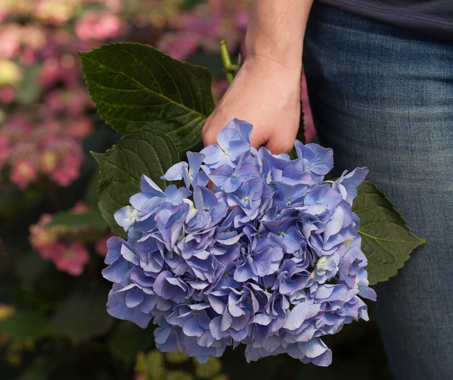 It's never too early to plan for the growing season. This week's garden club events include presentations on cutting gardens and container gardening. Photo of Cityline Rio Bigleaf hydrangea courtesy Proven Winners.