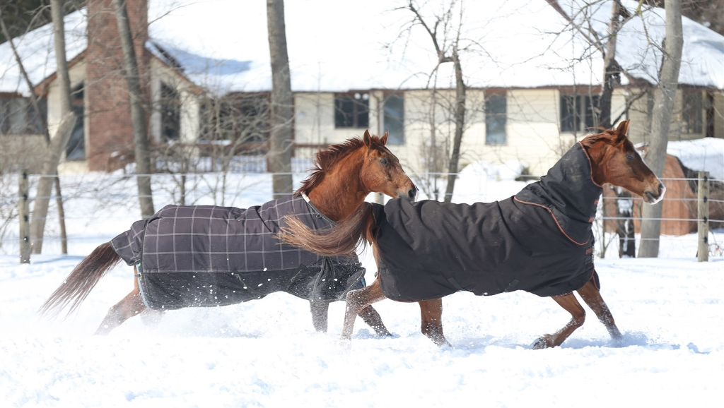 """Dr. Greg Daniel has proposed building an """"equestrian community"""" of 51 upscale single-family homes adjacent to his home and horse stables on Newhouse Road in Clarence. (Sharon Cantillon/Buffalo News)"""