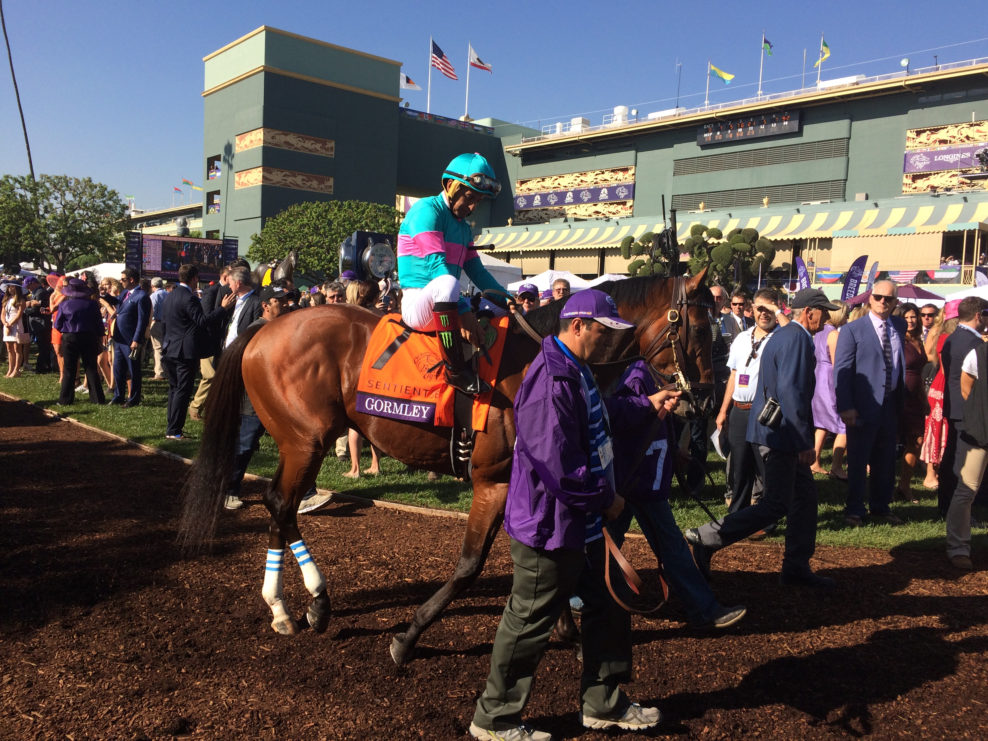 Gormley at the Breeders' Cup last November will return in the San Felipe Photo Credit: EquiSpace Ventures