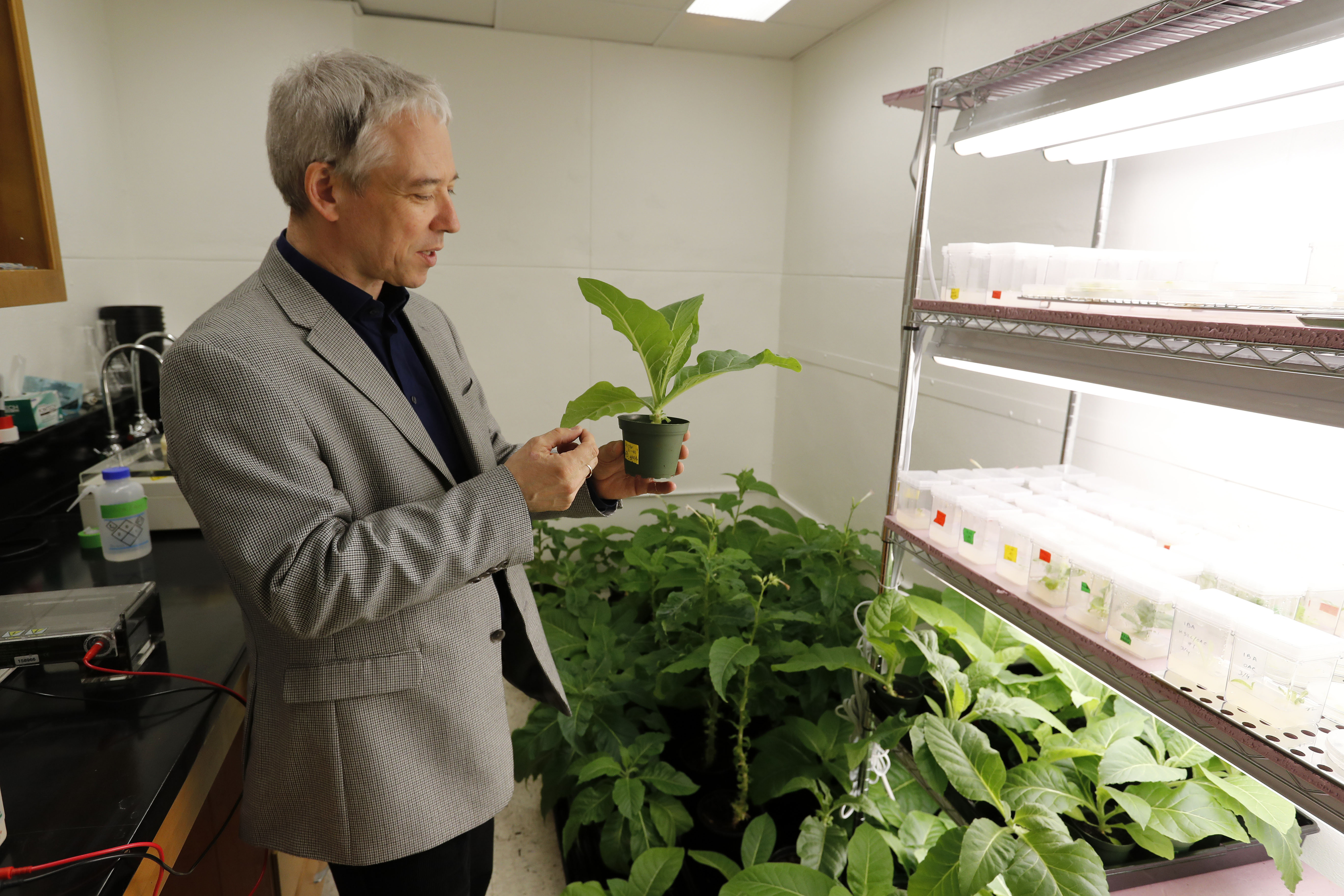 Paul Rushton, 22nd Century vice president, holds a tobacco plant at the company's laboratory.       (Mark Mulville/Buffalo News file photo)
