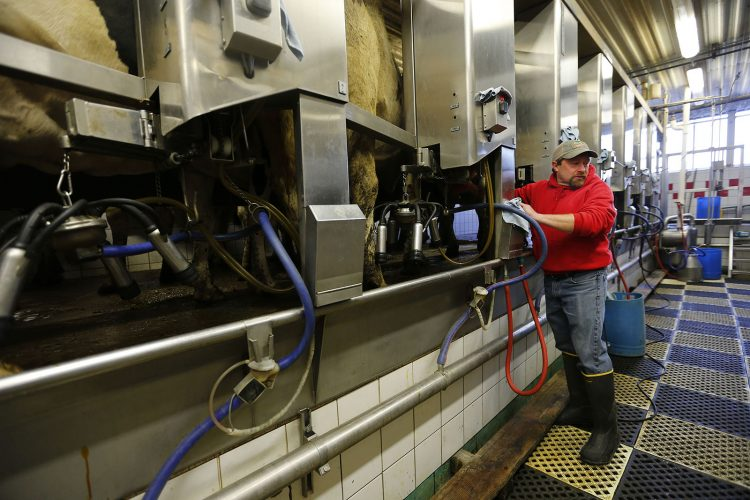Local dairy farmers struggle in a world 'just flooded with milk'