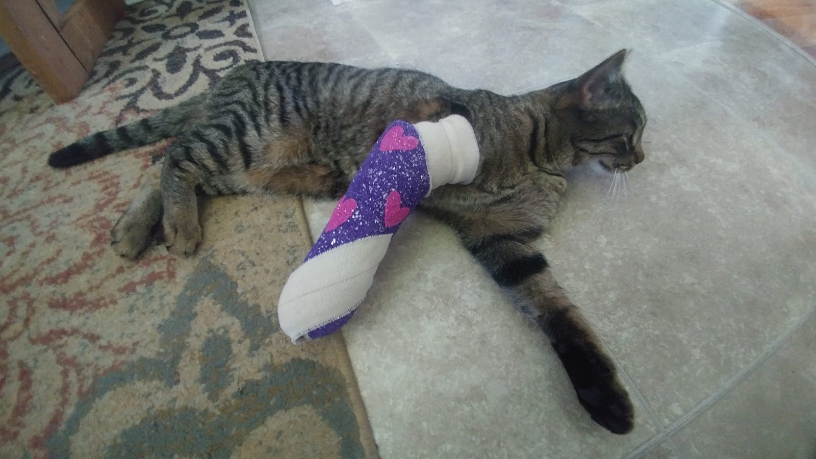 Joshua Mueller's cat was injured after getting caught in a large trap. (Photo provided by Joshua Mueller)