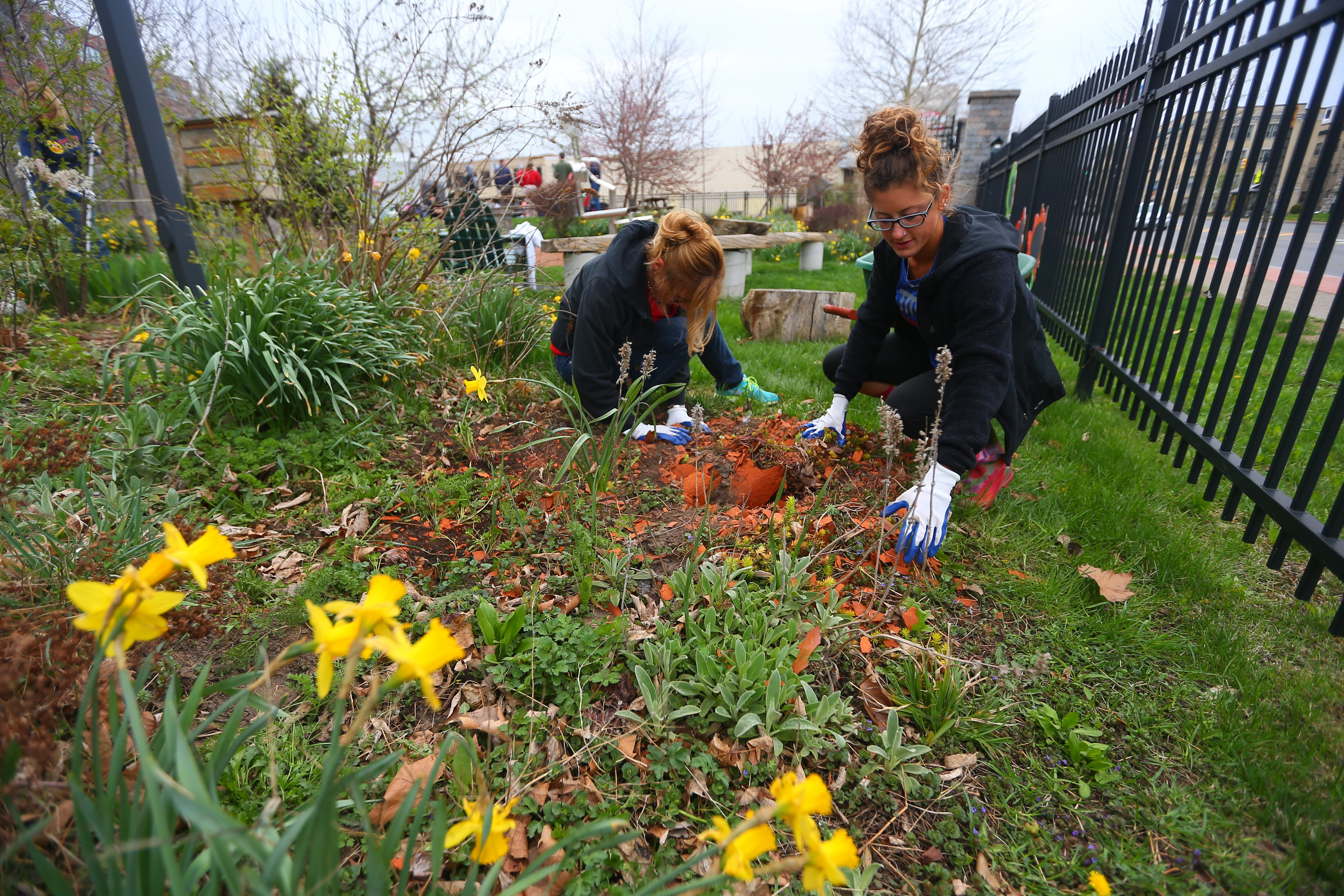 Melanie Hamilton, left, and Angela Pellett, of the Montante Group clean up and old planting and broken pottery and debris from beds, as they volunteer for Earth Day at Peoples Park in Buffalo, N.Y., on Friday April 22, 2016. (John Hickey/Buffalo News)