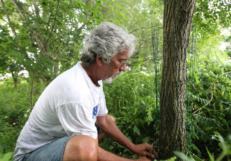 The Niagara Musky Association is about more than catching monster fish. In this 2013 file photo, member Carl Schenk wraps fencing around a tree on Strawberry Island to help protect a bald eagle nest from beavers that had been felling trees. (Sharon Cantillon/Buffalo News)