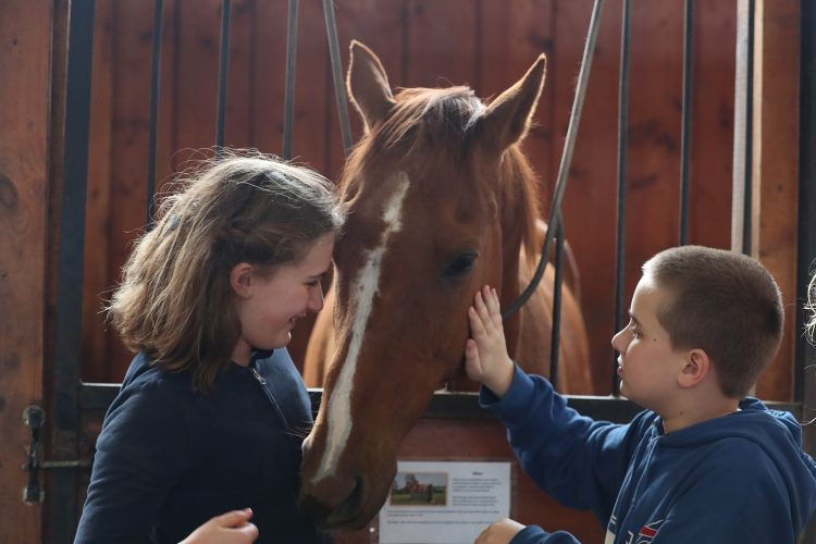 Help a Horse Day raises awareness about local rescues