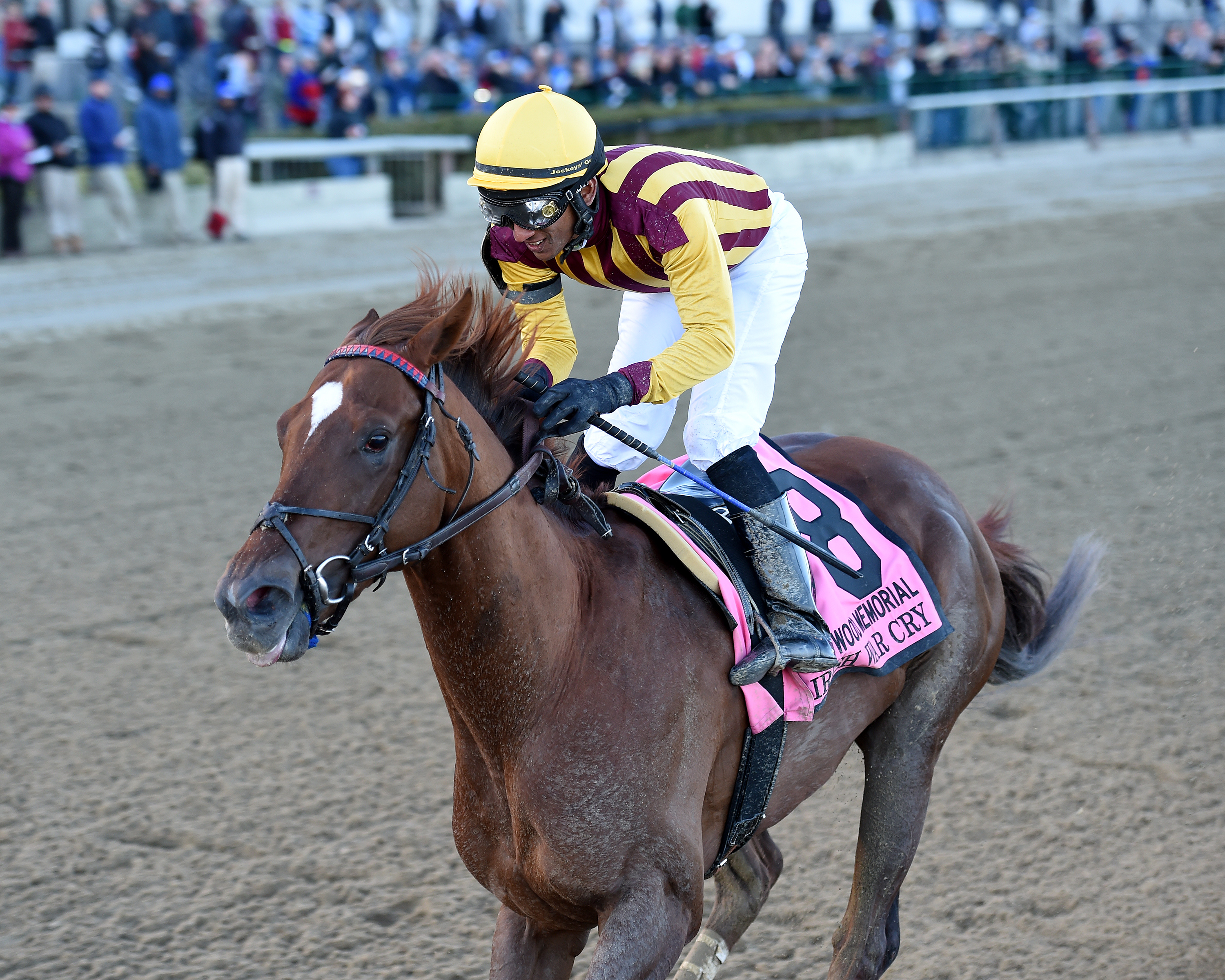 Irish War Cry comes into the Derby off an impressive win in the Wood Memorial Photo Credit: Chelsea Durand/NYRA