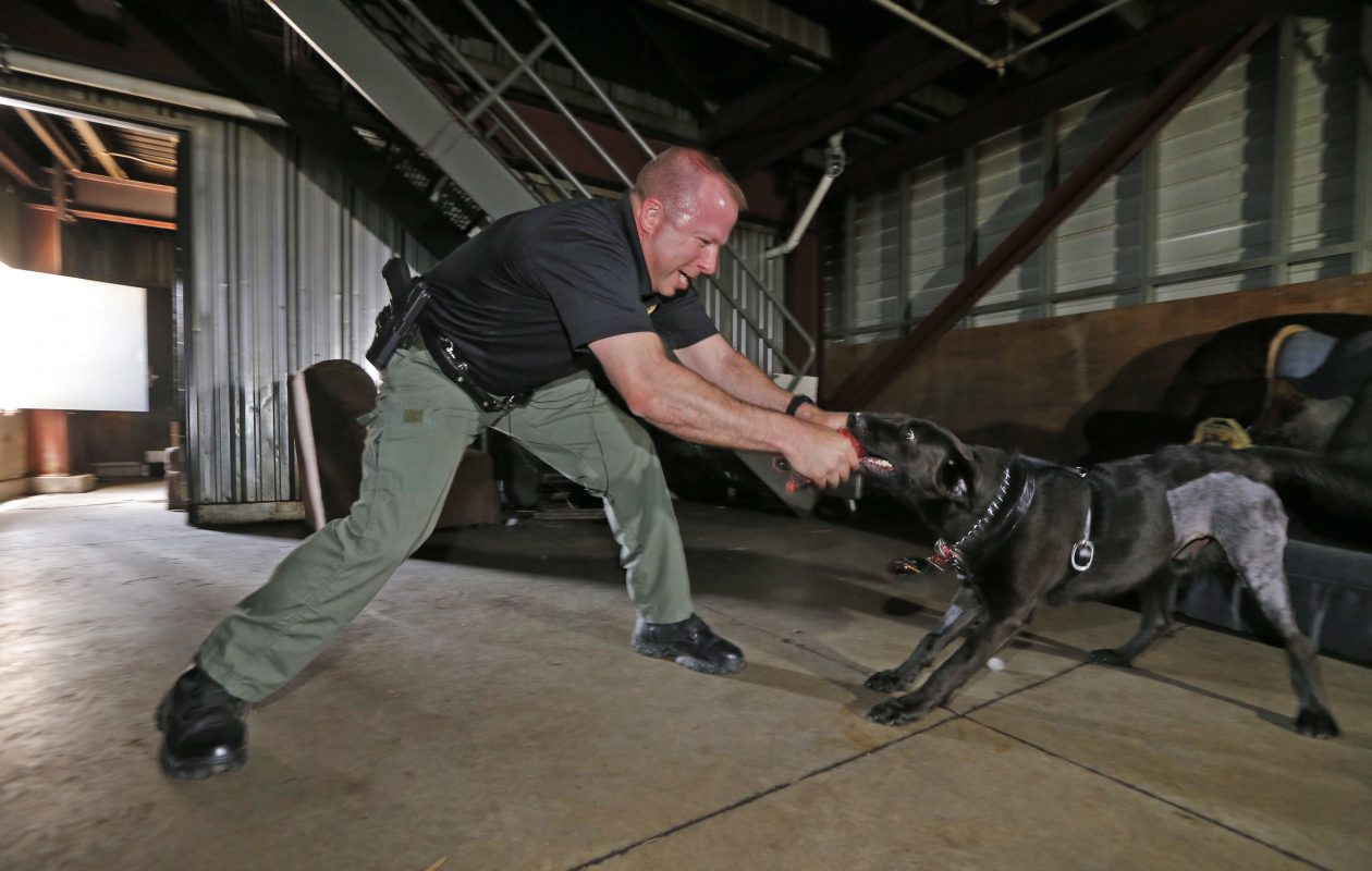 Axe and his handler, Det. Scott Kuhlmey, during a training session at the Erie County Emergency facility on Broadway in Cheektowaga. (Robert Kirkham/Buffalo News)