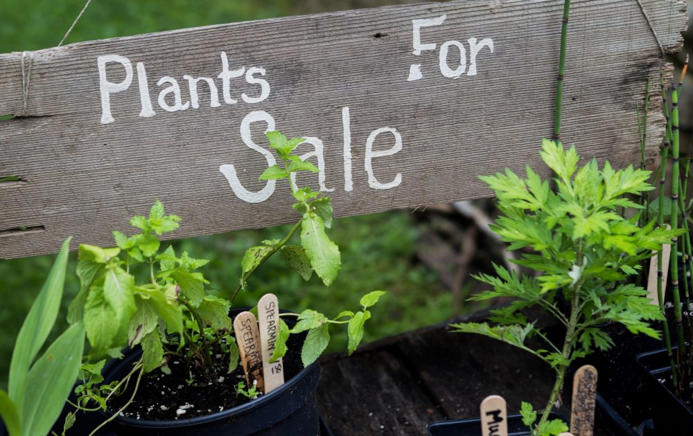 May is the month for plant sales presented by area garden clubs and the Buffalo and Erie County Botanical Gardens.