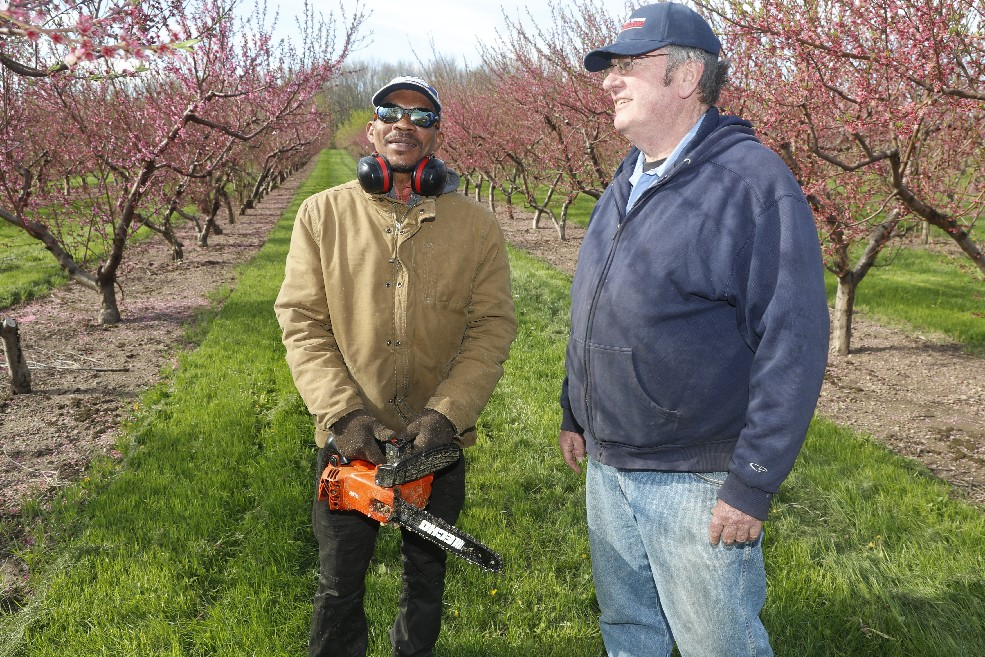Owner Jim Bittner, right, and farmhand Maxwell Graham, of Jamaica, plan how to trim the peach orchard at Bittner-Singer Orchards. Bittner is one of many farmers who fear immigration crackdowns will scare off the legal migrant workers they depend on. (John Hickey/Buffalo News)