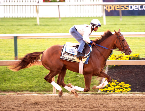 Senior Investment,third in the Preakness, will try and upset the Belmont field. Photo Credit: Jim McCue/Maryland Jockey Club
