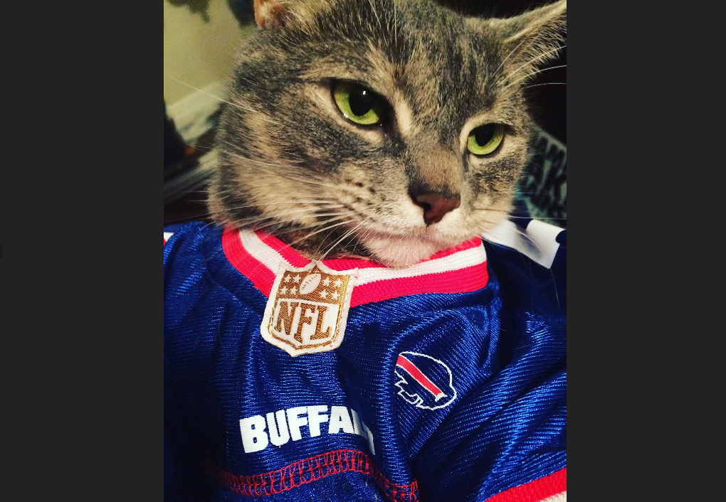 Jerry Sullivan hates cats, and jerseys. We can only wonder what he thinks of this. Pebbles, a domestic shorthair owned by Samantha Hyman, was featured in our National Pet Week gallery earlier this year.