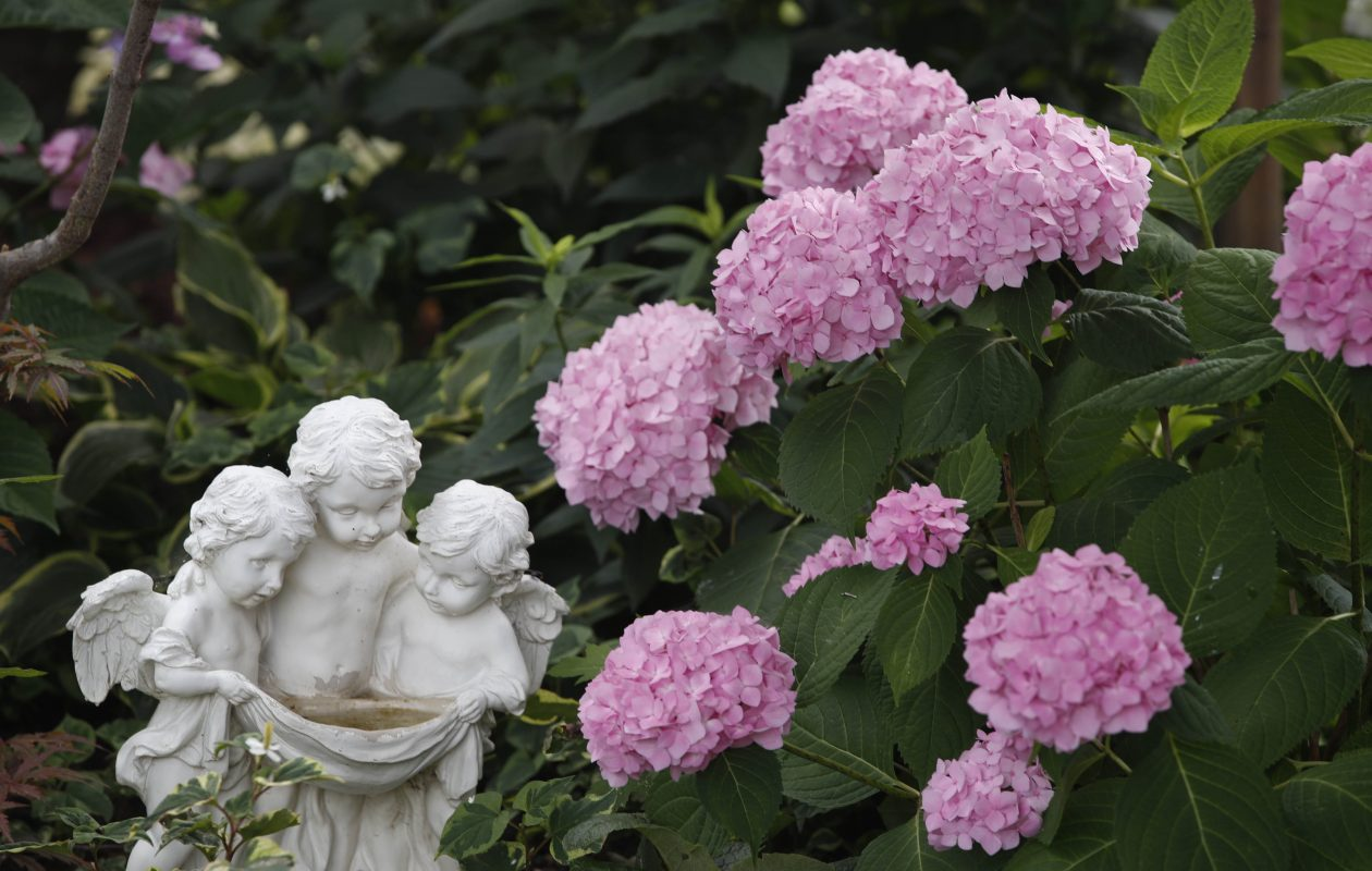 A lawn ornament is nestled next to a blooming hydrangea in the garden of Linda and Chris Monaco in Lackawanna. (Sharon Cantillon/Buffalo News)