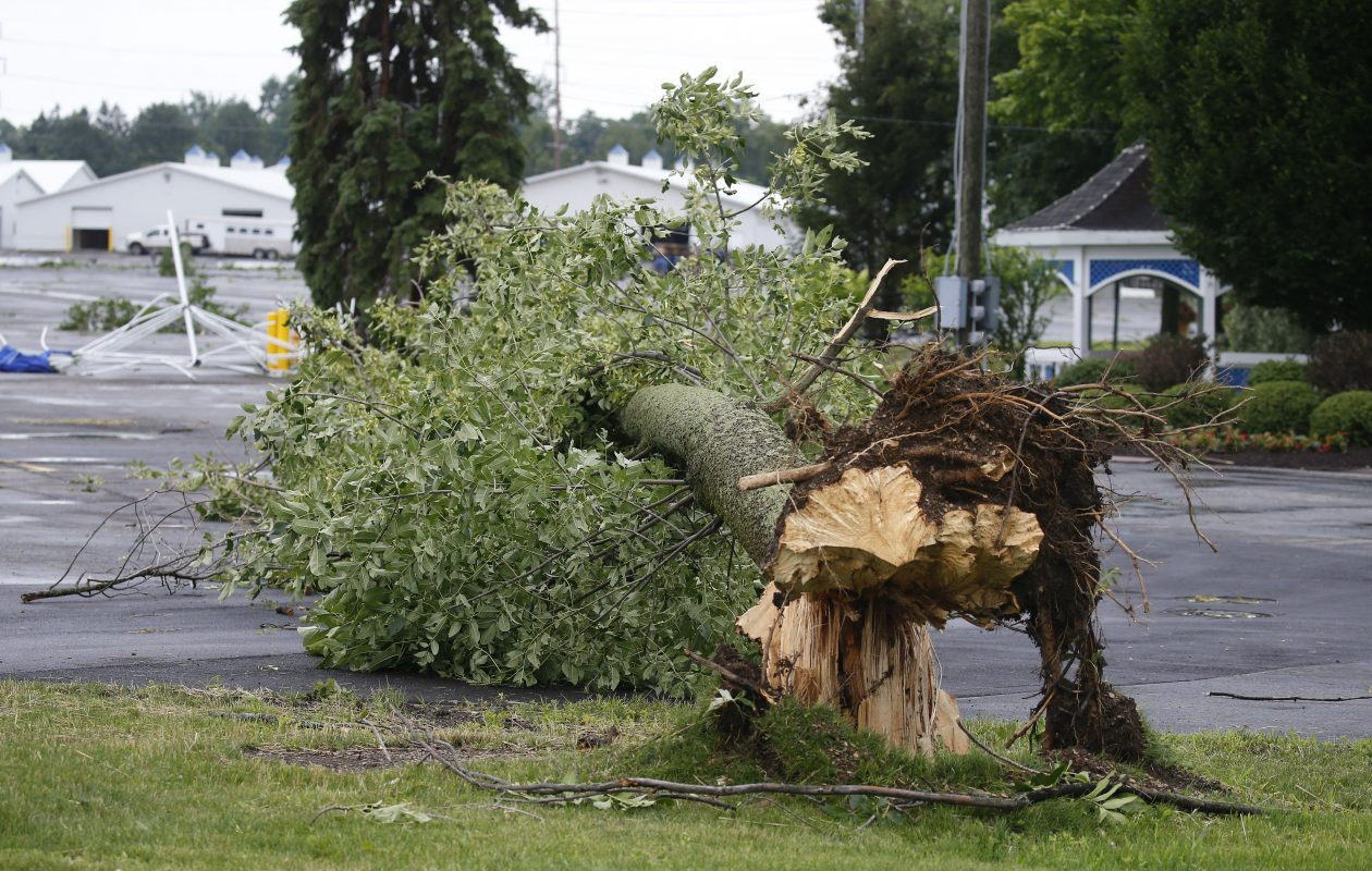 A downed tree at the Fairgrounds in Hamburg Thursday, July 20, 2017            (Mark Mulville/Buffalo News)