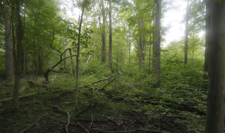 After rejecting developer, Amherst wants to preserve 60 swampy acres as parkland