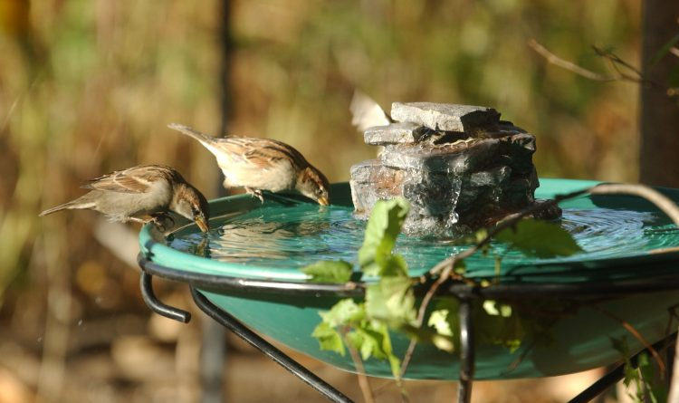 Wild Birds Unlimited store coming to East Amherst
