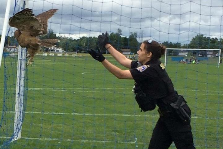 An Erie County Sheriff's deputy helped rescue an owl from a soccer goal net at a Grand Island park Tuesday. (Erie County Sheriff's Office)