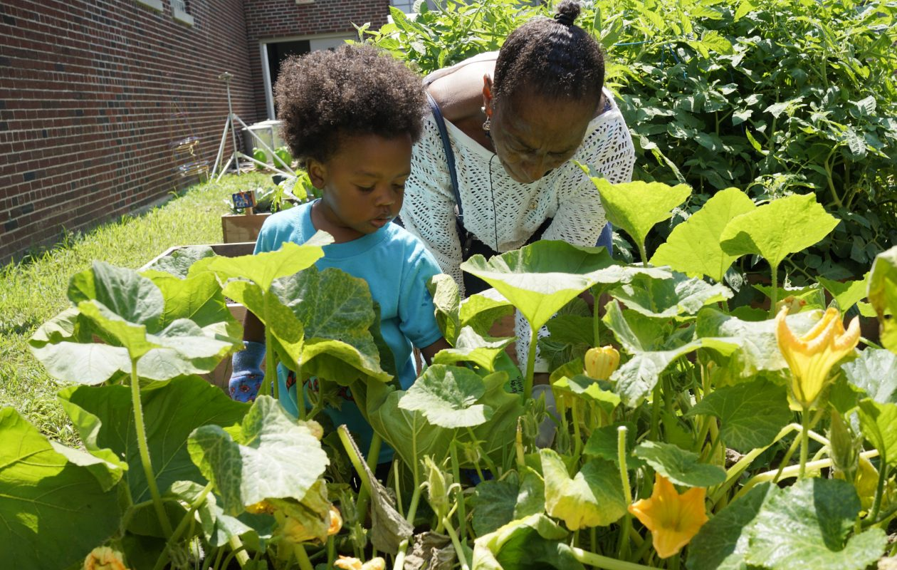 A community garden is part of the community schools initative at Harvey Austin School. Here, Julian McClinton, 2, and his grandmother, Linda Gray, water vegetable plants. (Derek Gee/Buffalo News)