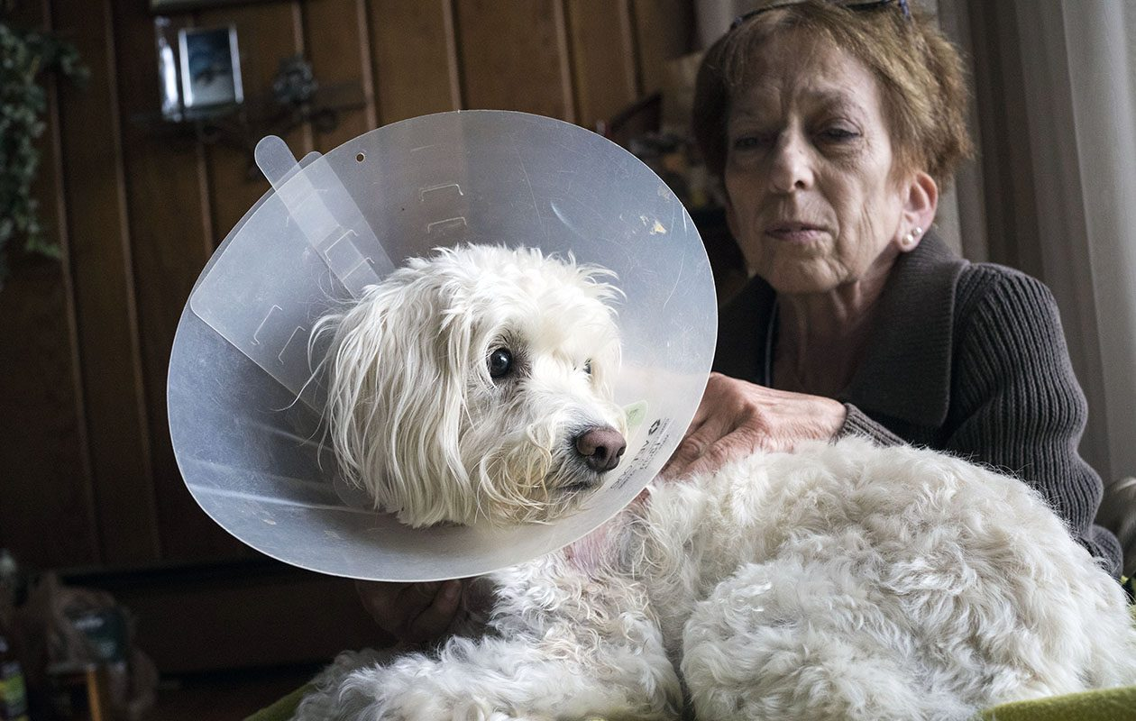 Daisy Moore tends to her injured cockapoo, Brandi, who was mauled by a pit bull during a walk in their Grand Island neighborhood in early September. Daisy is the second cockapoo Moore has owned that was attacked by a pit bull. (Derek Gee/Buffalo News)