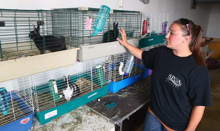 Lockport neighbors surprised after SPCA seizes 343 animals from home