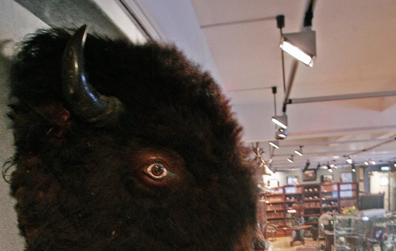 A stuffed buffalo head similar to this one is mounted in the Sabres' dressing room. NHL media regulations prohibit still photography in the dressing room. (Getty Images)