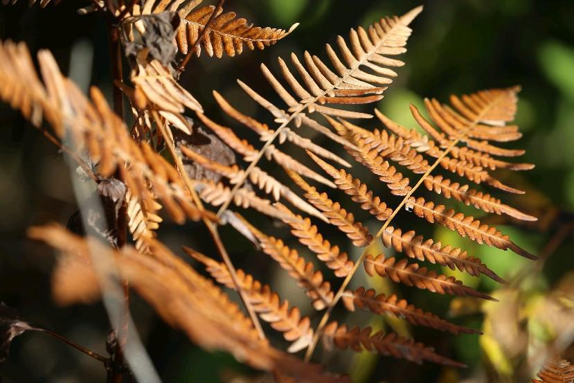 Fall foliage and scenes from Reinstein Woods Nature Preserve in Cheektowaga. (John Hickey/Buffalo News file photo)